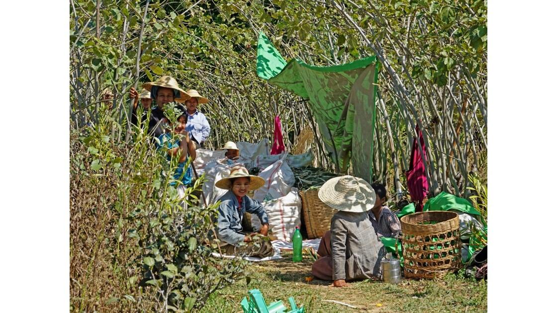 Myanmar Entre les villages de Tale-U et d'Inne 15