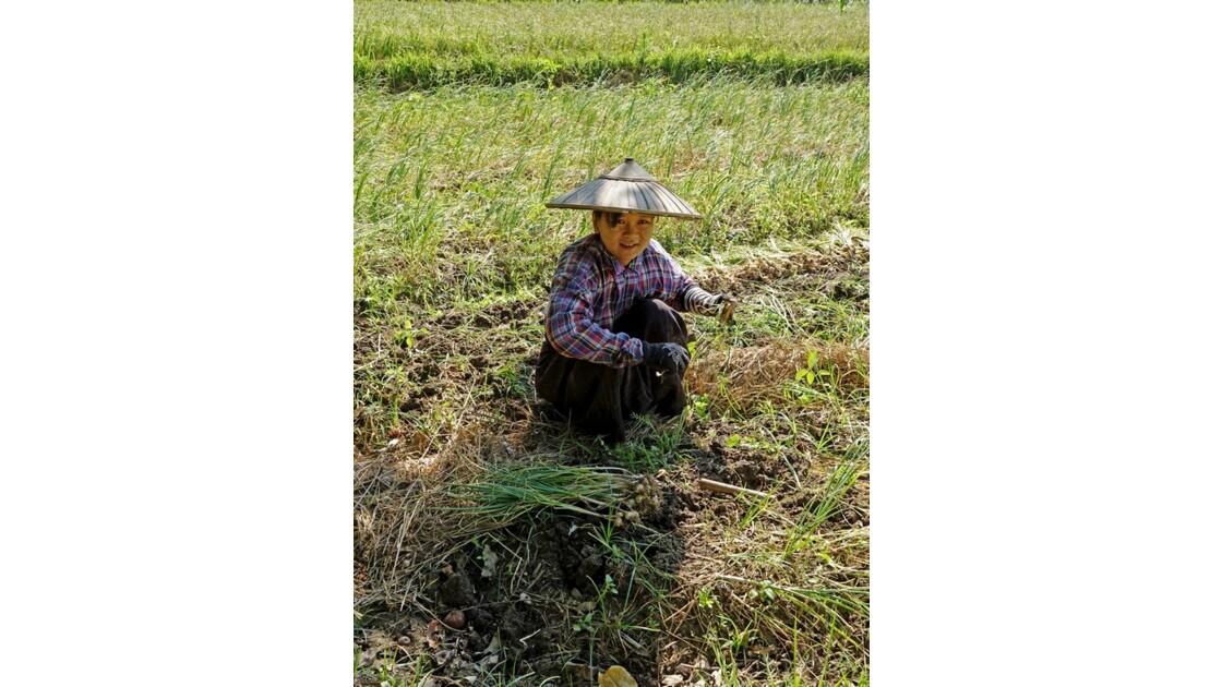 Myanmar Cultures d'ail près du village de Tale-U 3