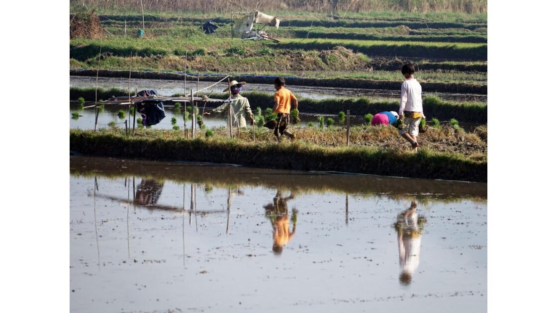 Myanmar Entre les villages de Tale-U et d'Inne 1