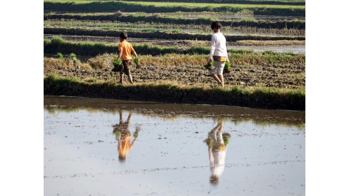 Myanmar Entre les villages de Tale-U et d'Inne 2