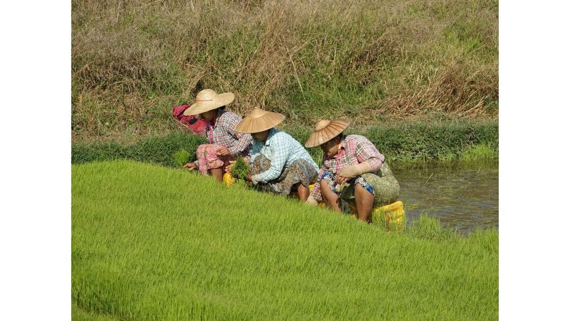 Myanmar Entre les villages de Tale-U et d'Inne 3