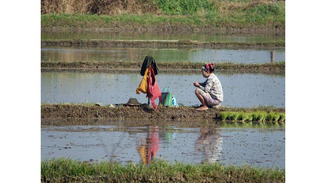 Myanmar Entre les villages de Tale-U et d'Inne 4