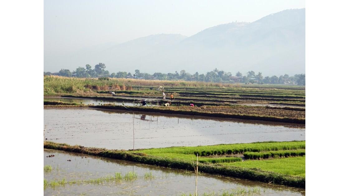 Myanmar Entre les villages de Tale-U et d'Inne 6