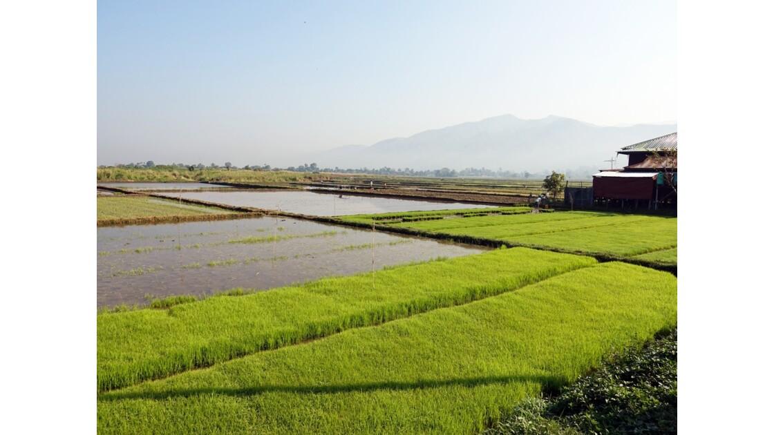 Myanmar Entre les villages de Tale-U et d'Inne 7