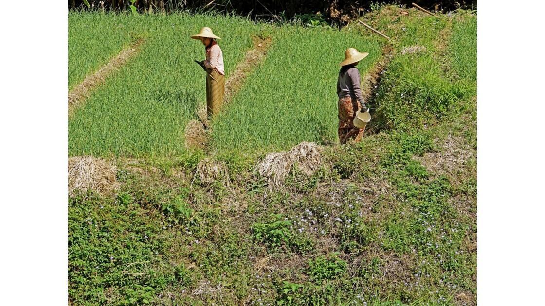 Myanmar Entre les villages de Tale-U et d'Inne 11
