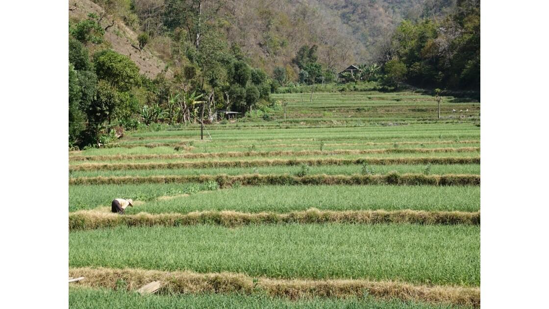 Myanmar Entre les villages de Tale-U et d'Inne 12