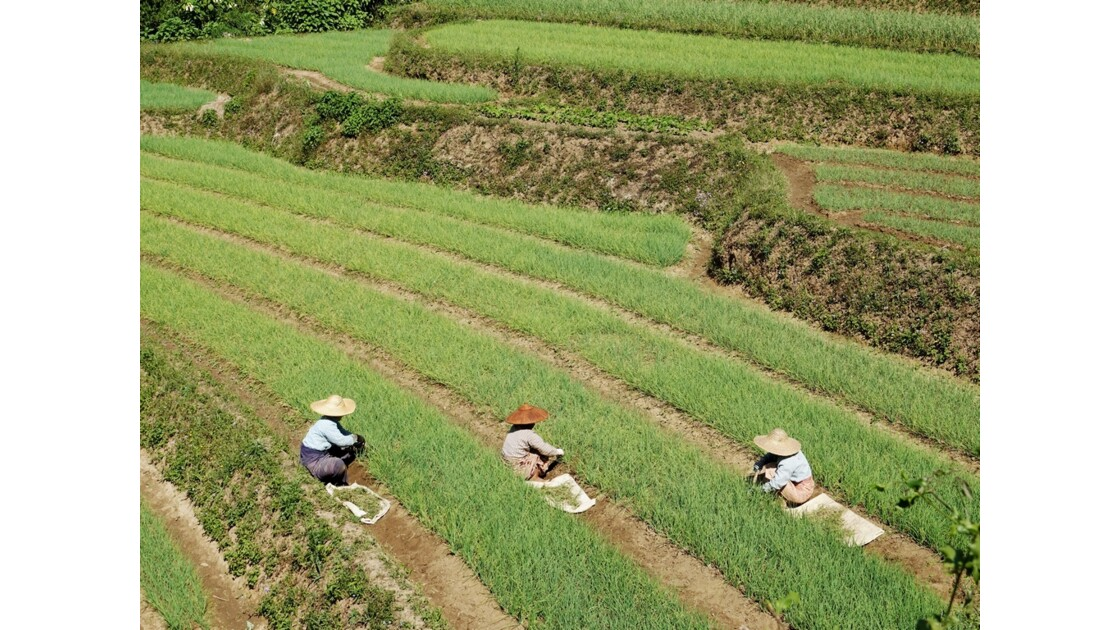 Myanmar Entre les villages de Tale-U et d'Inne 13