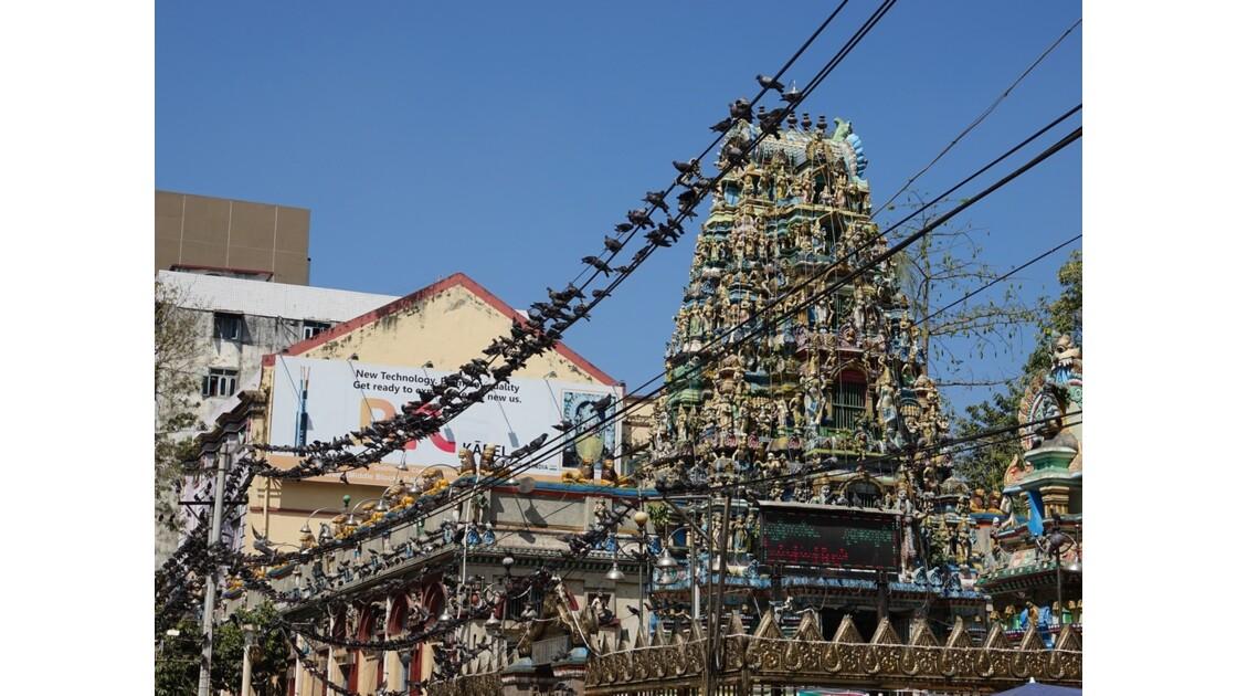 Myanmar Yangon Les oiseaux du Temple indien Sri Kali 3