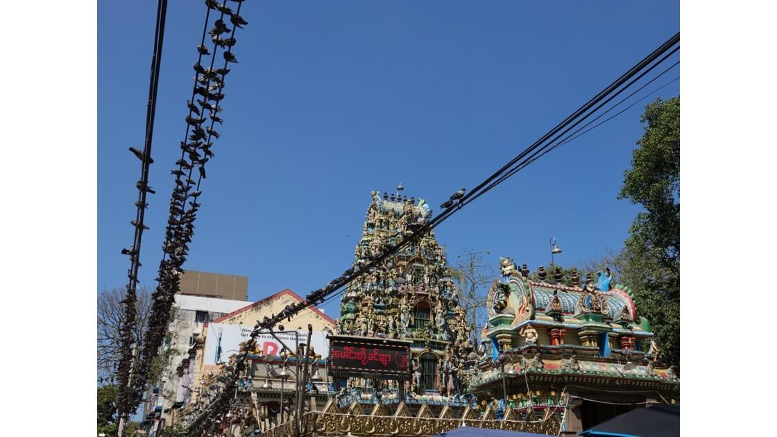 Myanmar Yangon Les oiseaux du Temple indien Sri Kali 1
