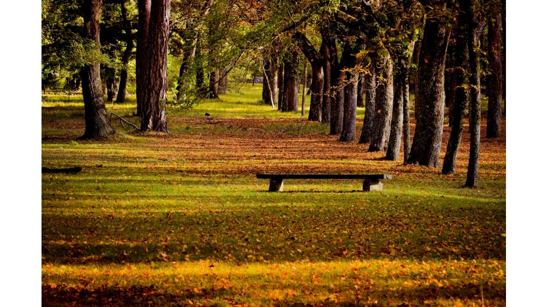 Automne en sous bois