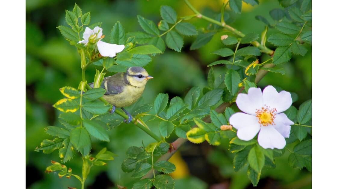 Le temps des fleurs et de la pollinisation