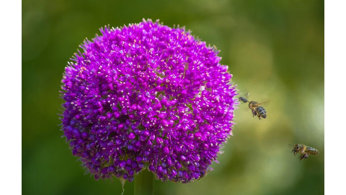 Le temps des fleurs et de.. la pollinisation !