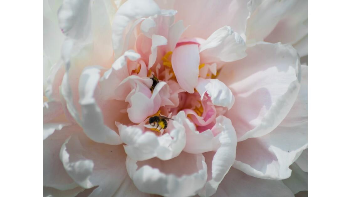 Le temps des fleurs et de la... Pollinisation !