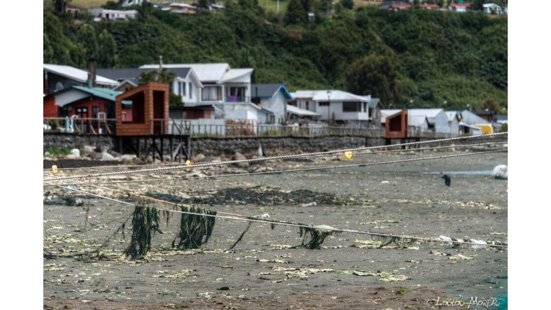 Île de Chiloé au Chili
