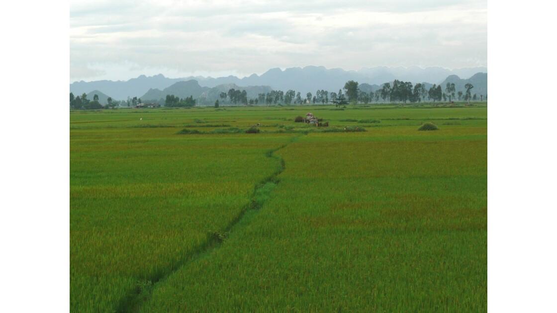 Paysage des rizières