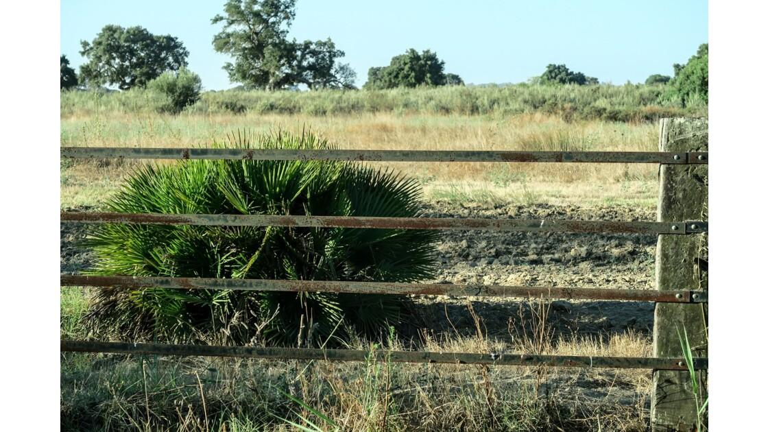 Parc National Doñana