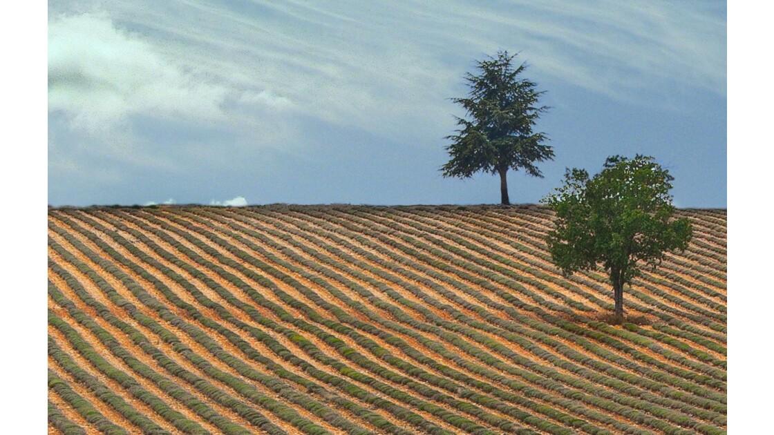 Vigne de Provence