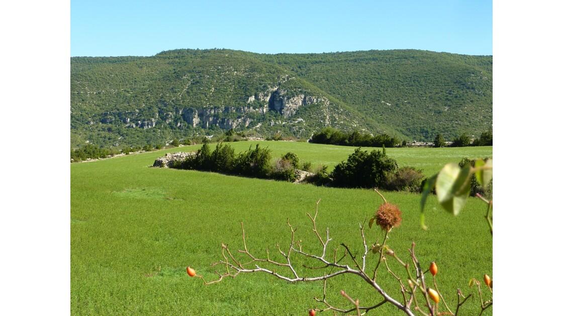 Campagne lauroussienne - Lauroux - Hérault