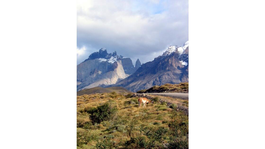Guanaco en Patagonie