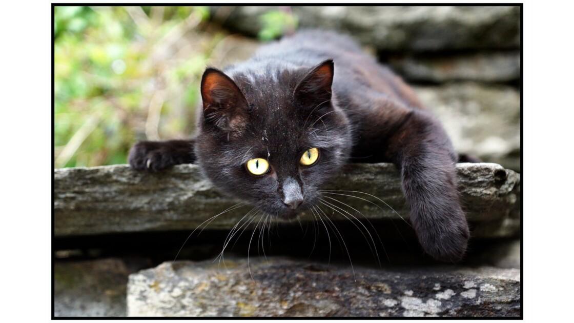 Bergen - Le chat joueur de Bryggen