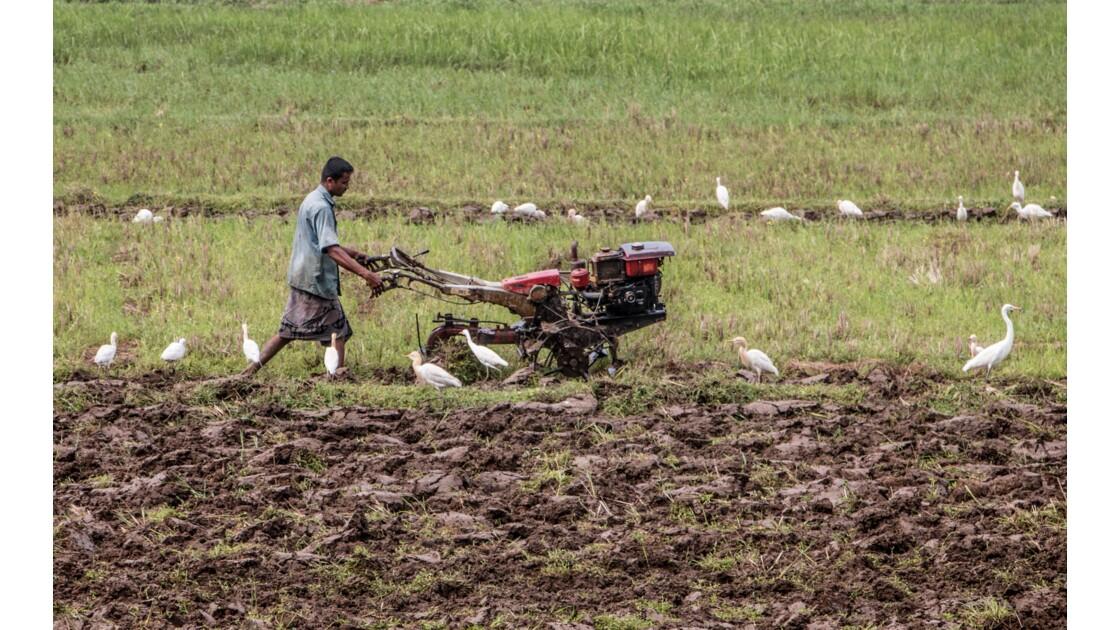Le fermier en train de labourer son champs