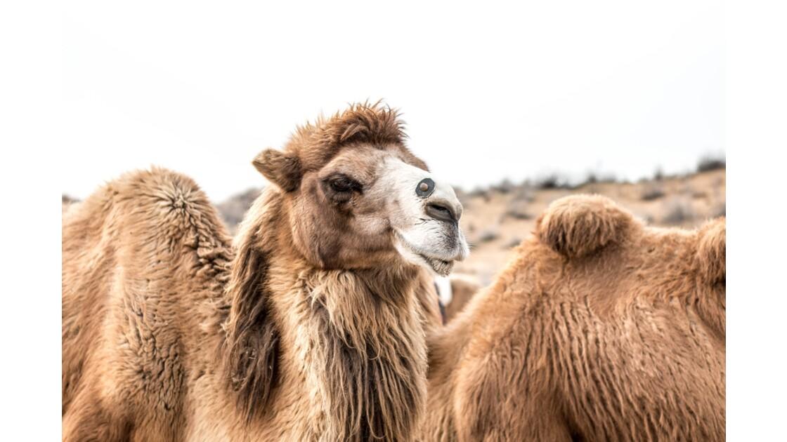 Une randonnée à dos de chameau