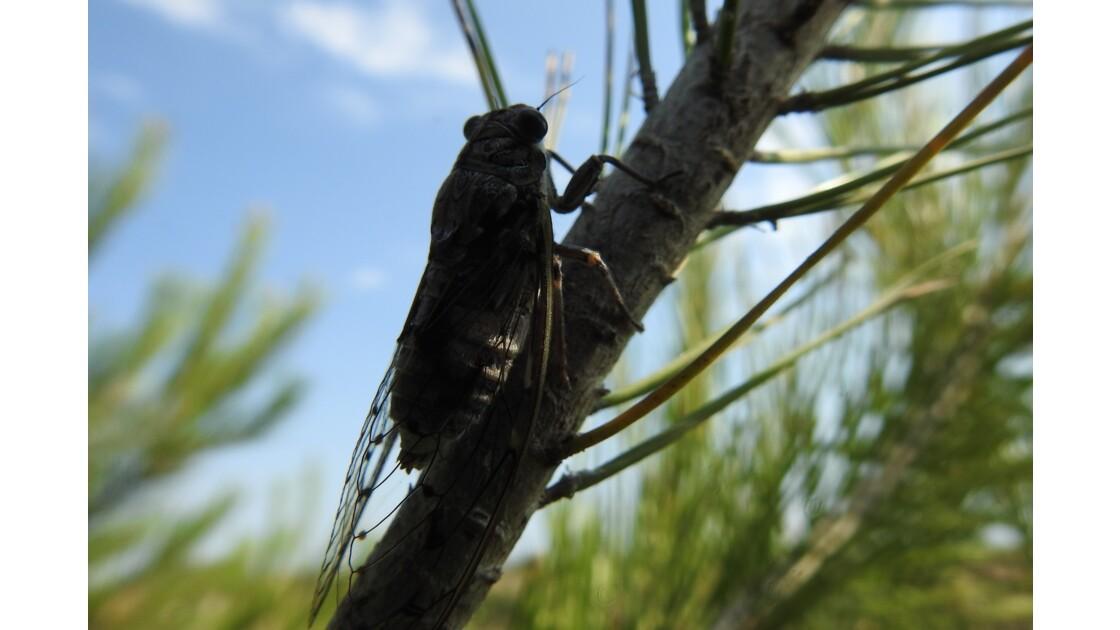 insectes et mangeur d'insectes