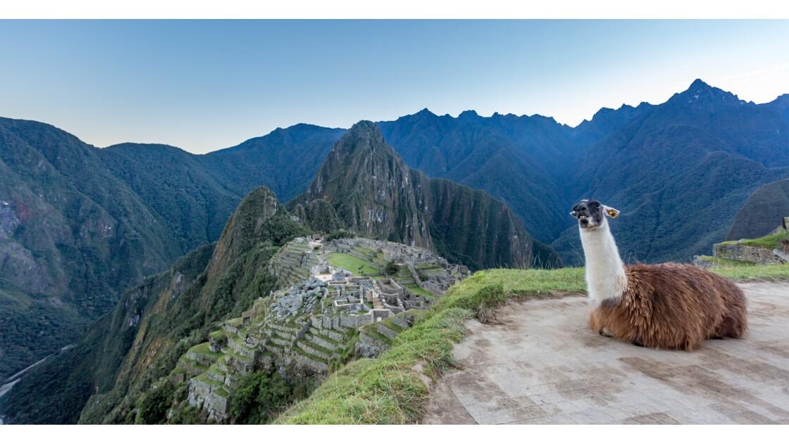 Un matin au Machu Picchu