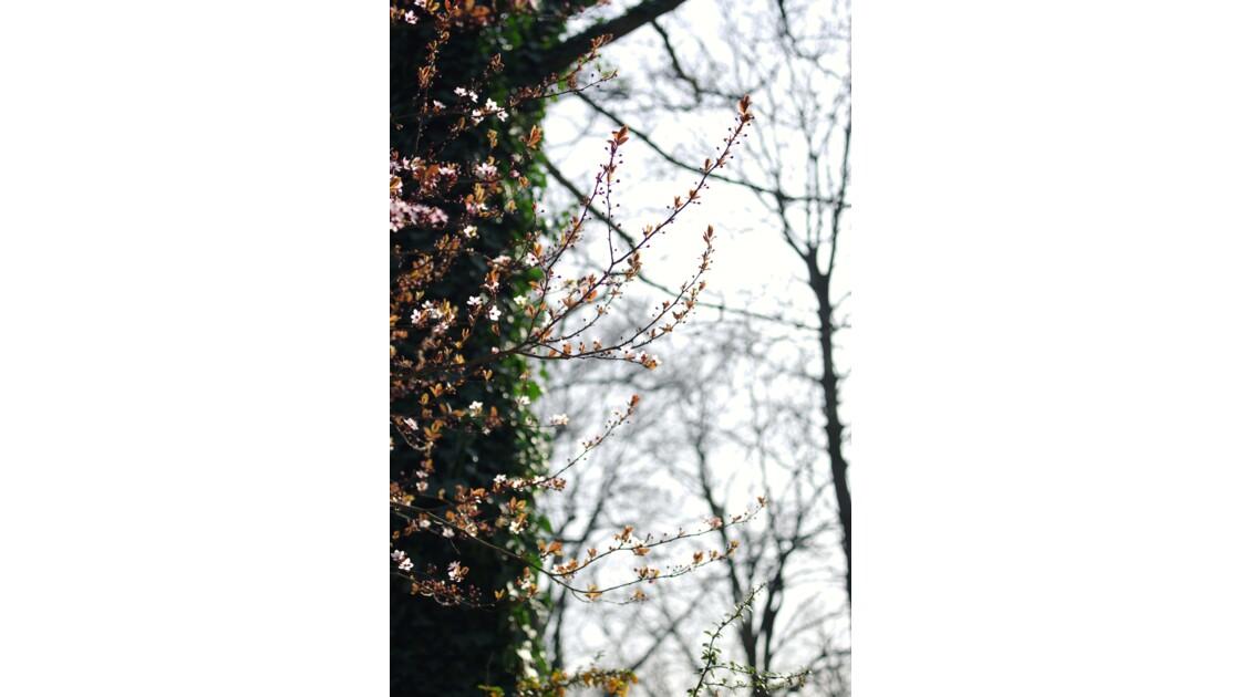 Le printemps à Paris