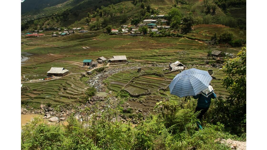 Les rizières de Sapa