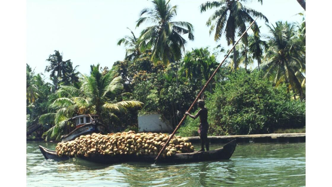 Transport de noix de coco