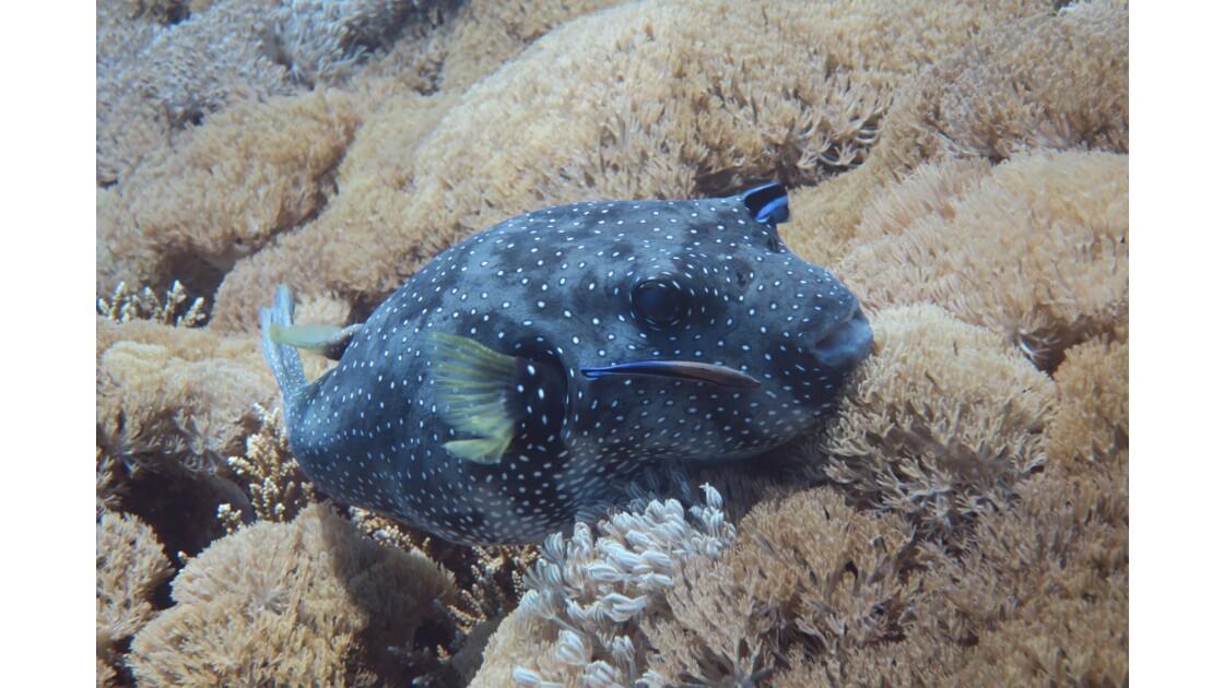 Les îles Komodos, sous la surface...