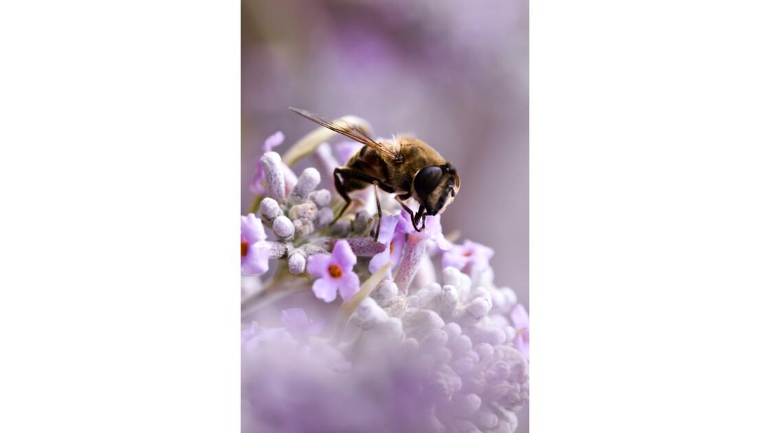 Insecte du printemps