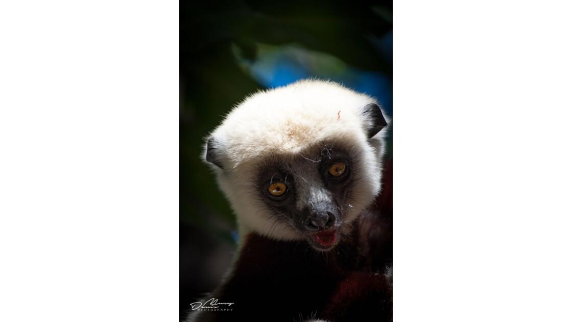 Visages de Madagascar