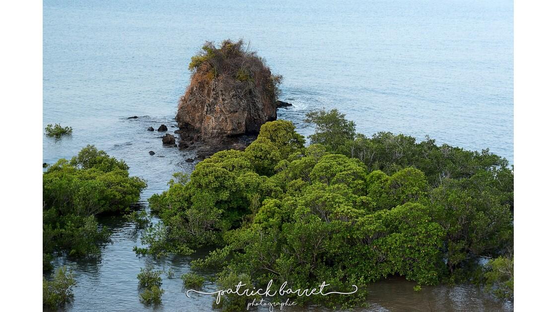 La mangrove 2