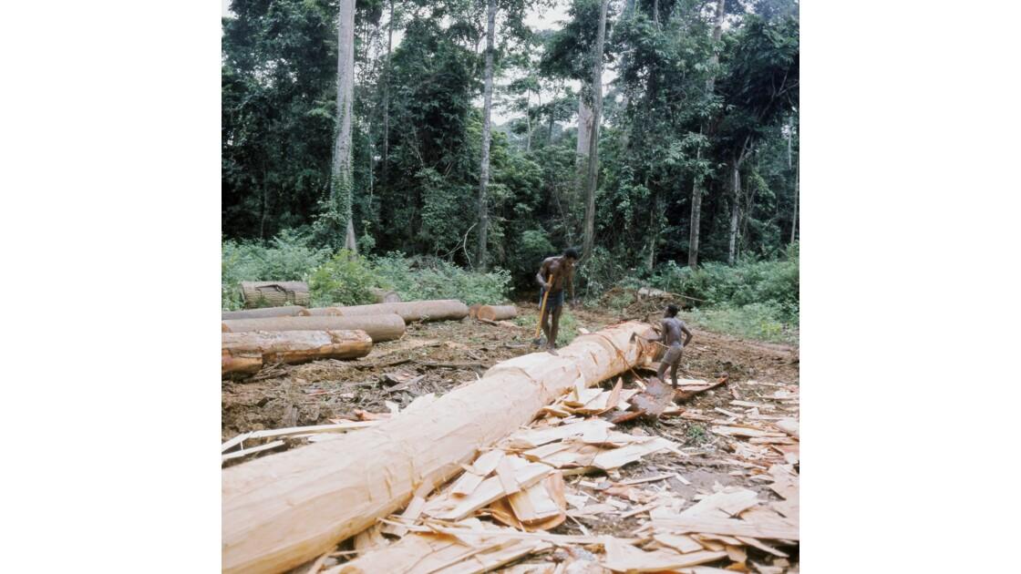 Congo 70 Chantier forestier Placongo Désaubiérage 7