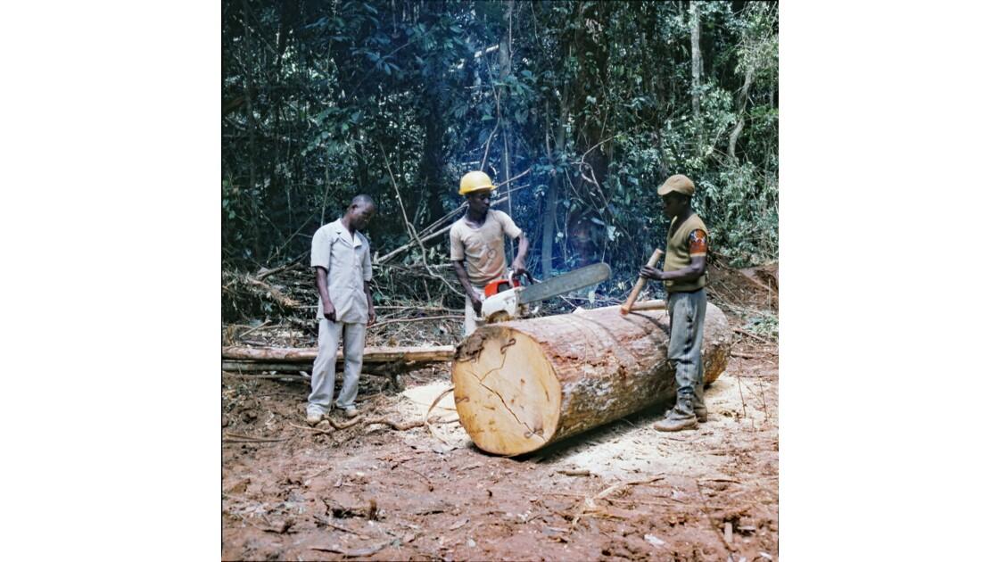 Congo 70 Forêt du Chaillu tronçonnage 7