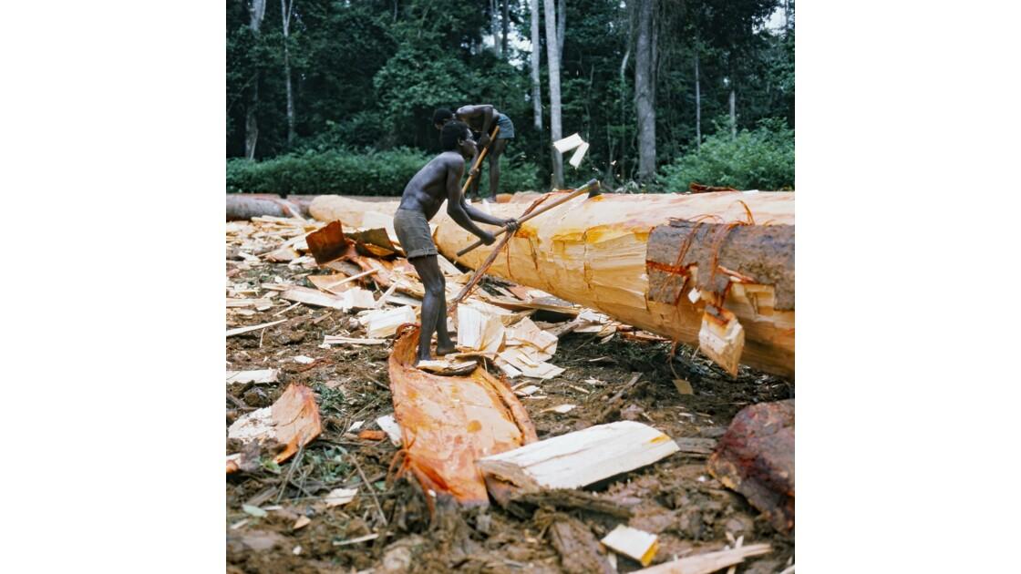 Congo 70 Forêt du Chaillu tronçonnage 8