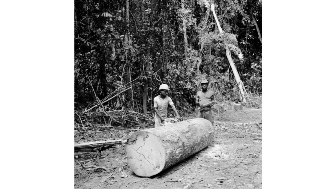 Congo 70 Forêt du Chaillu tronçonnage 12