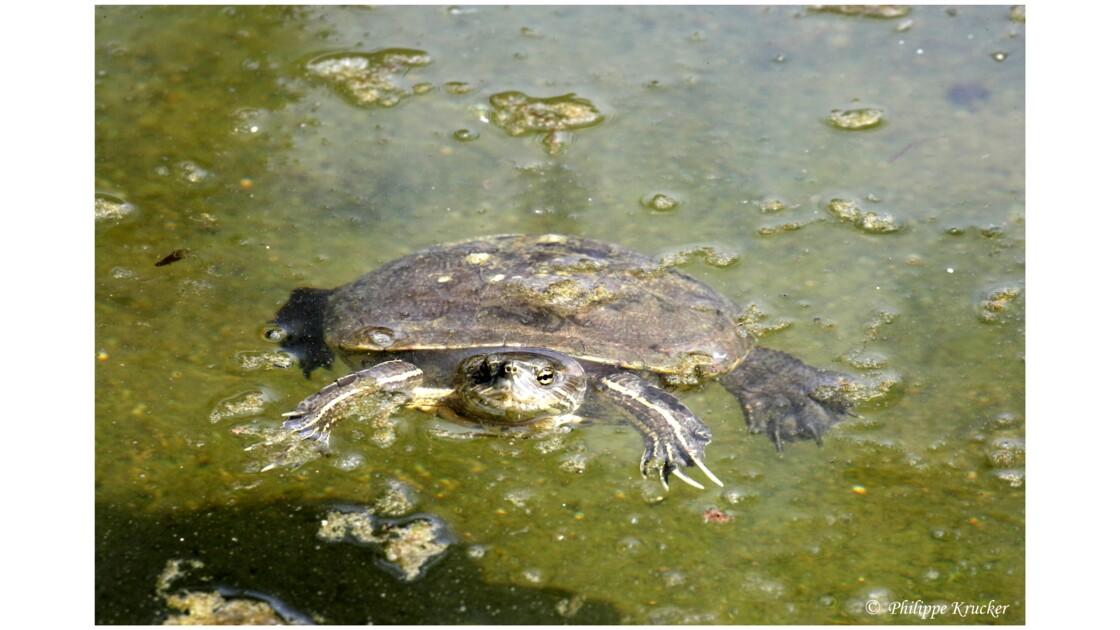 LA BOCA (ferme des crocodiles)