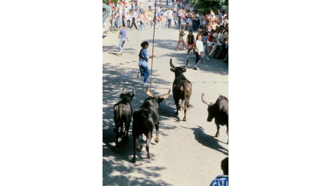 Provence 1979 Eygalières Encierro de bious 12