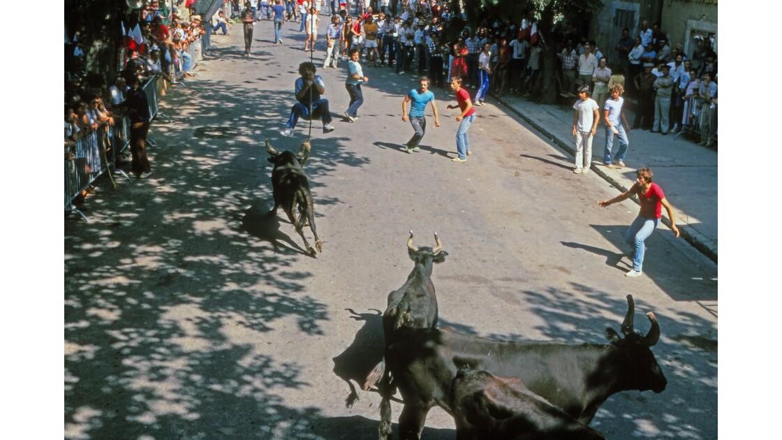 Provence 1979 Eygalières Encierro de bious 14