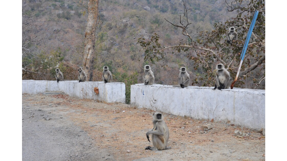 inde Rajasthan 2012