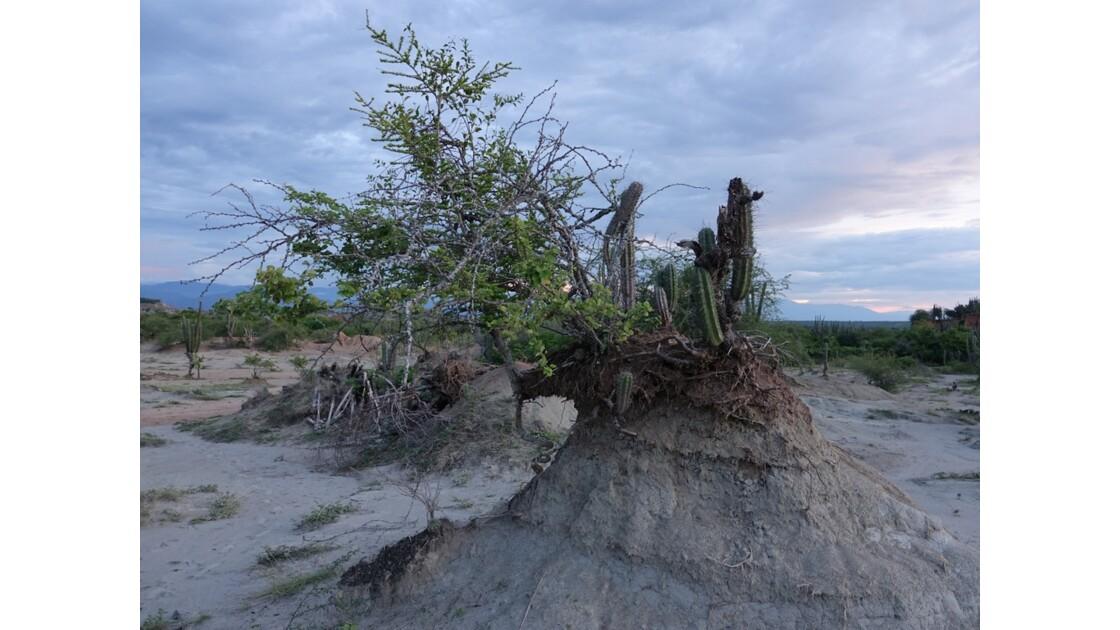 Colombie Soirée au Desertio de la Tatacoa 4