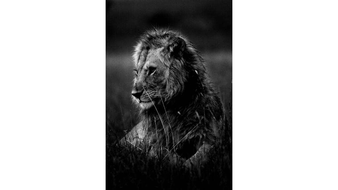 Grain de lion