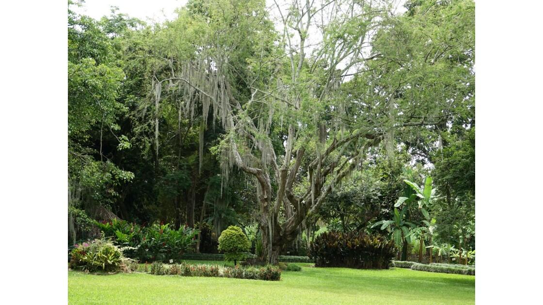 Colombie Hacienda Piedechinche 9