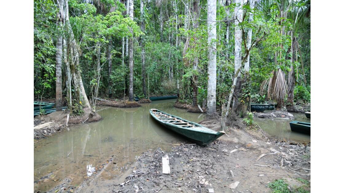 Puerto Maldonado, amazonie