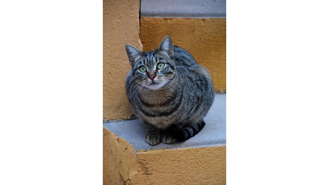 le chat Menton