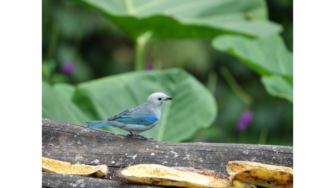 Colombie Jardin Botanico del Quindio Colibri 1