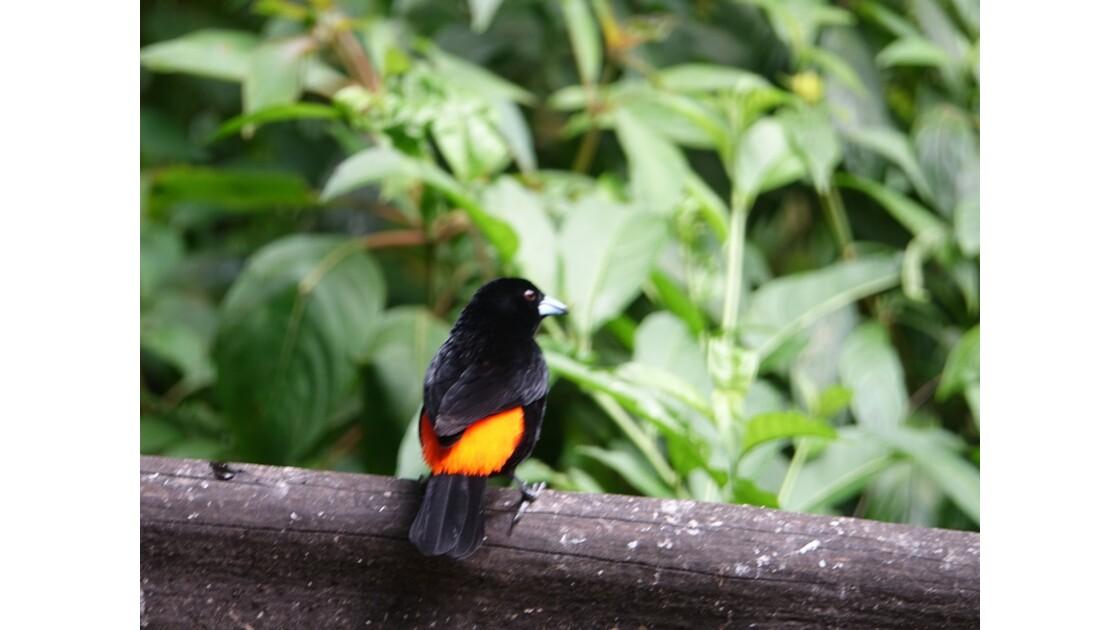 Colombie Jardin Botanico del Quindio Colibri 3
